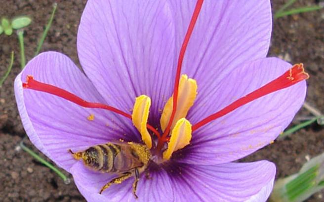 Το θαυματουργό φυτό που συμβάλλει στην ανάπτυξη φαρμάκων κατά του καρκίνου